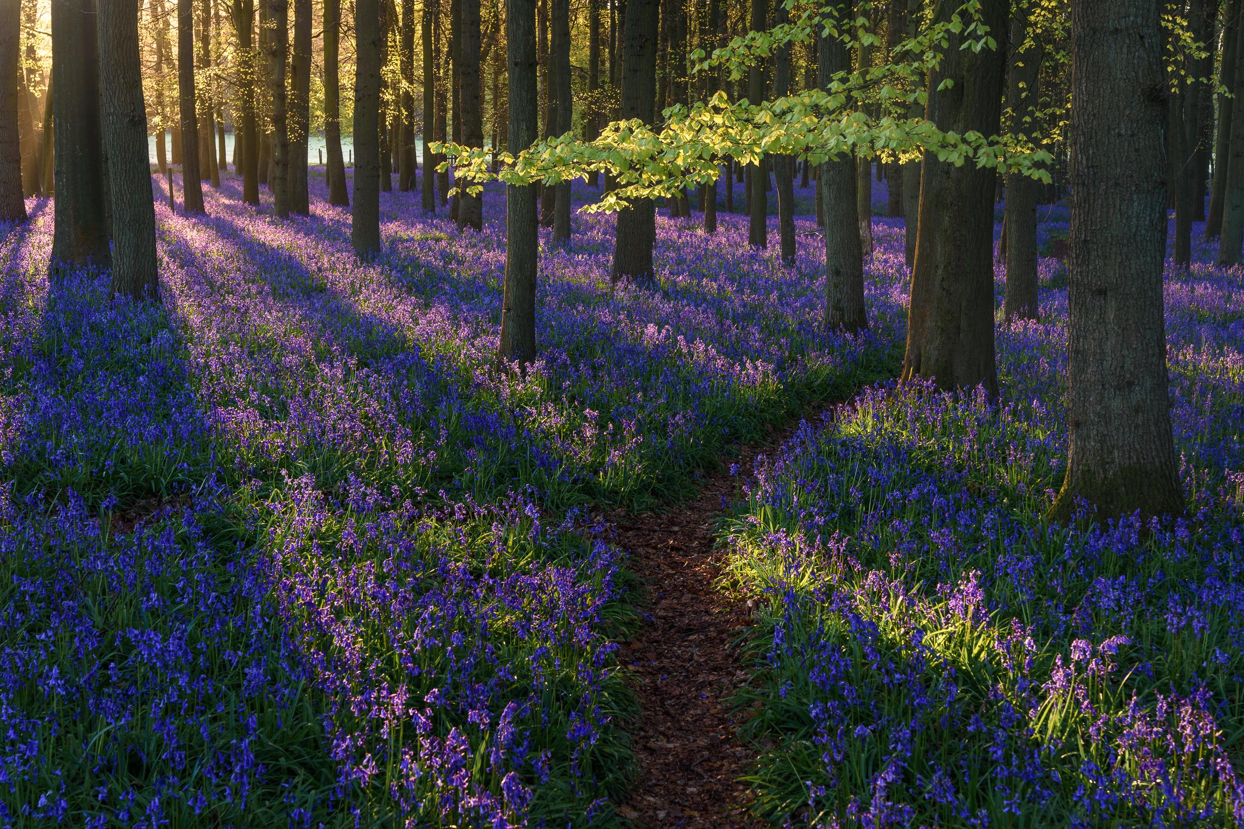 UK Landscapes - South